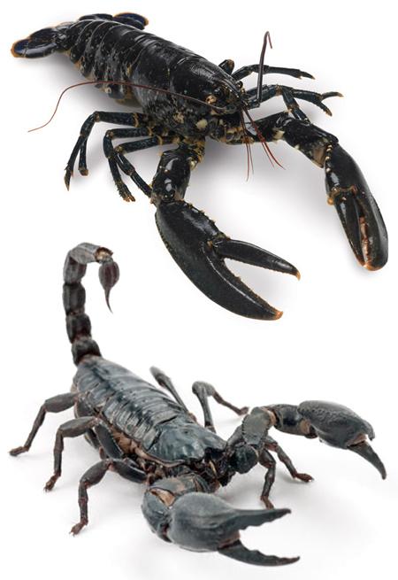 LobsterSkorpion